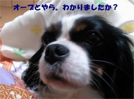 08_convert_20131220181904.jpg