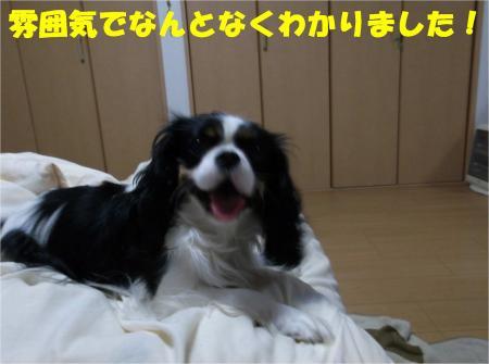 09_convert_20121214185404.jpg