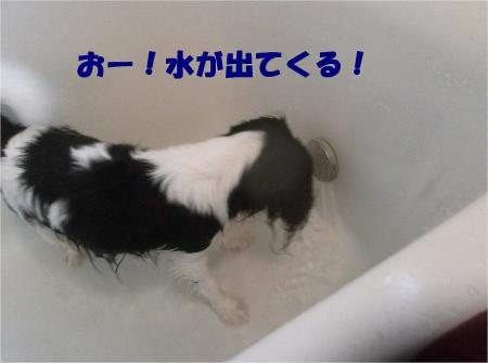 09_convert_20121217164649.jpg