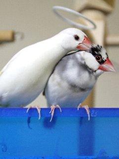 白梅&小梅♪