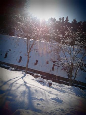 tsurikichi02.jpg