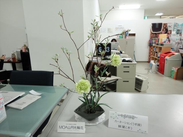 120501 カーネーション(うすみどり) 銀葉(木)