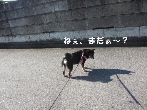 008_convert_20121026132518.jpg