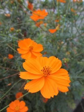 052_convert_20120920113019.jpg