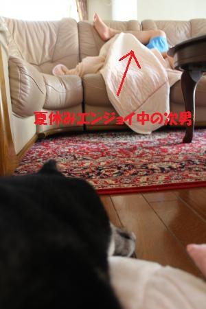 124_convert_20120807180059.jpg