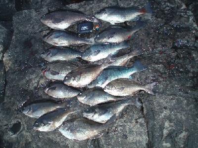 中美漁1日目釣果