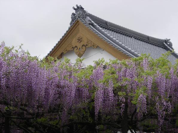 DSCN5731ふじ寺3