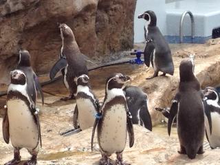 __ペンギン