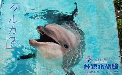 桂浜水族館ポスター