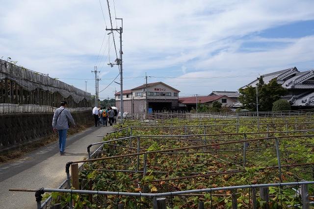 1410921-asuka-018-S.jpg