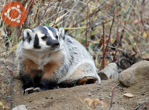Ubuntu 5.10 Breezy Badger