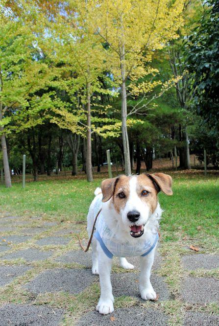 2014長岡公園1194