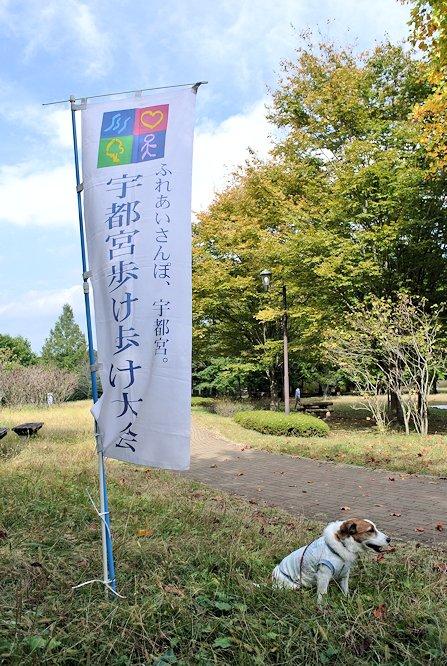 2014長岡公園1195