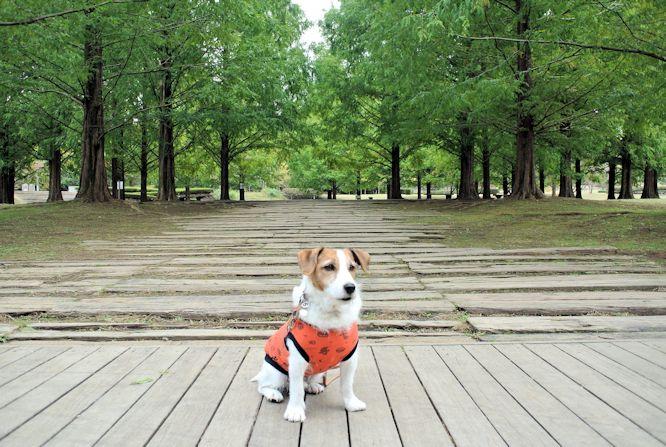 2014長岡公園1209