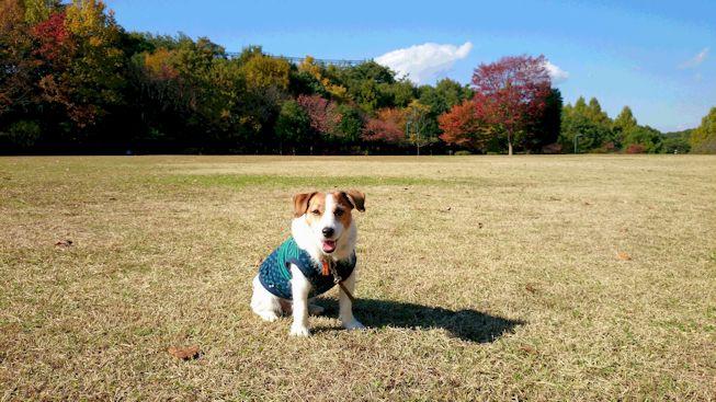 2014長岡公園1247