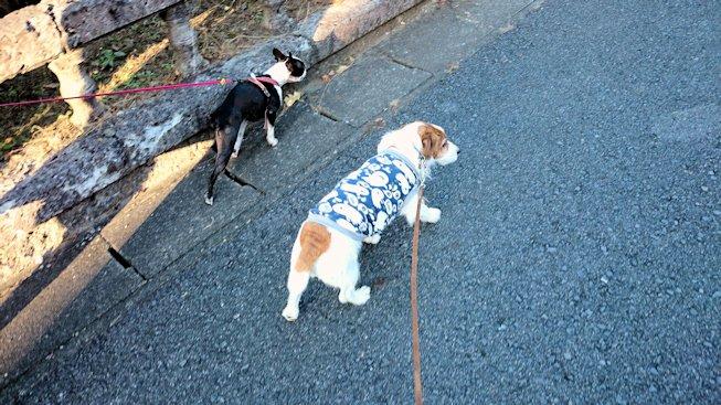 2014散歩084