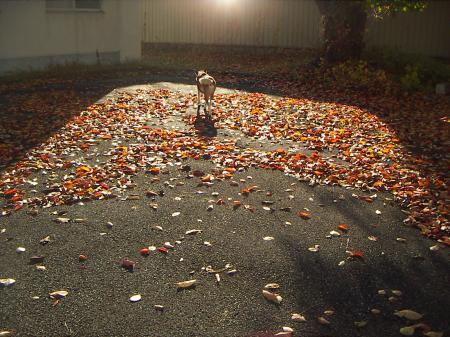 タロウの秋1