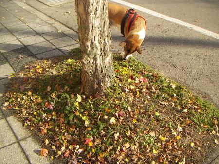 タロウの秋2