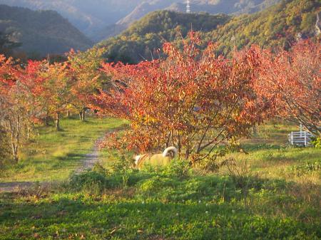 タロウの秋3