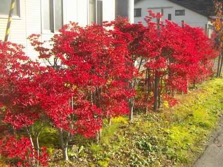 タロウの秋4
