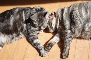 ネコの昼寝Mo2
