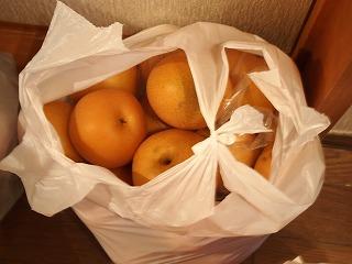 リンゴ・ナシ