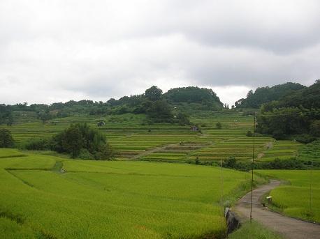 稲渕棚田へ