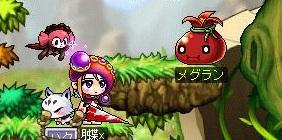 Maple130321_204242.jpg