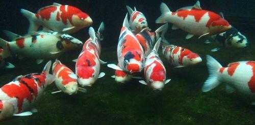 魚目線 (3)