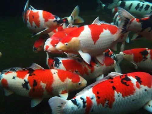 魚目線 (4)