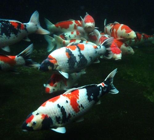 魚目線 (5)