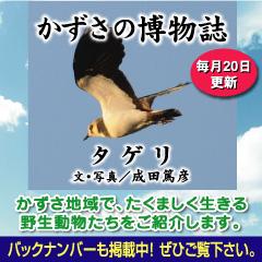 kazusa2013-12.jpg