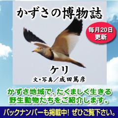 kazusa201301.jpg