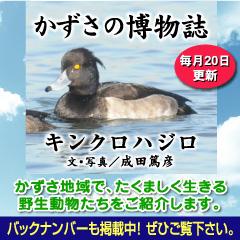 kazusa201303.jpg