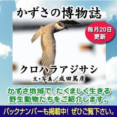 kazusa201410.jpg
