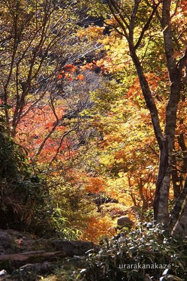 黄葉トンネルの登山道