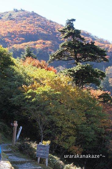 剣山 遊歩道 ジロウギュウへ