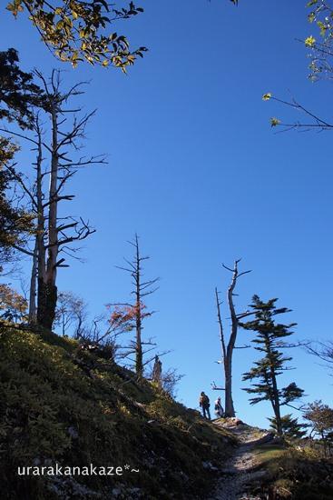 真っ青な空と立ち枯れ木