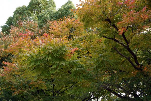 20121030nakaiichou2.jpg