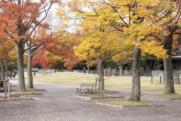 20121110banapaku21.jpg