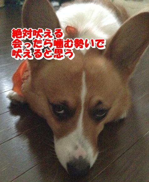 IMG_4373_20141105005729fbd.jpg