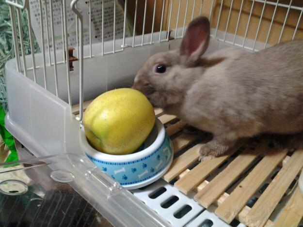 ウサギの贅沢