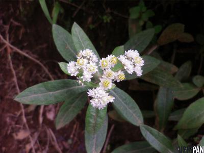 丹沢の花3