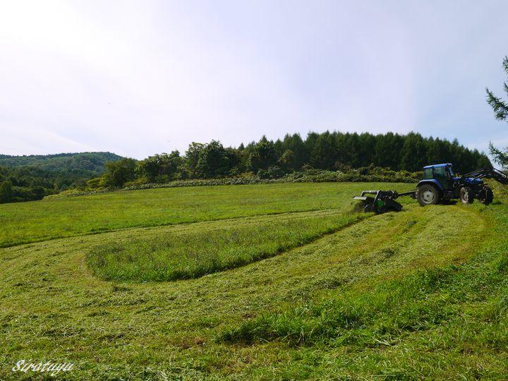 二番草刈取3