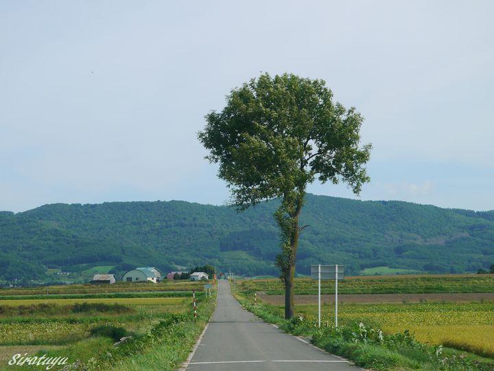 畑を見守る木