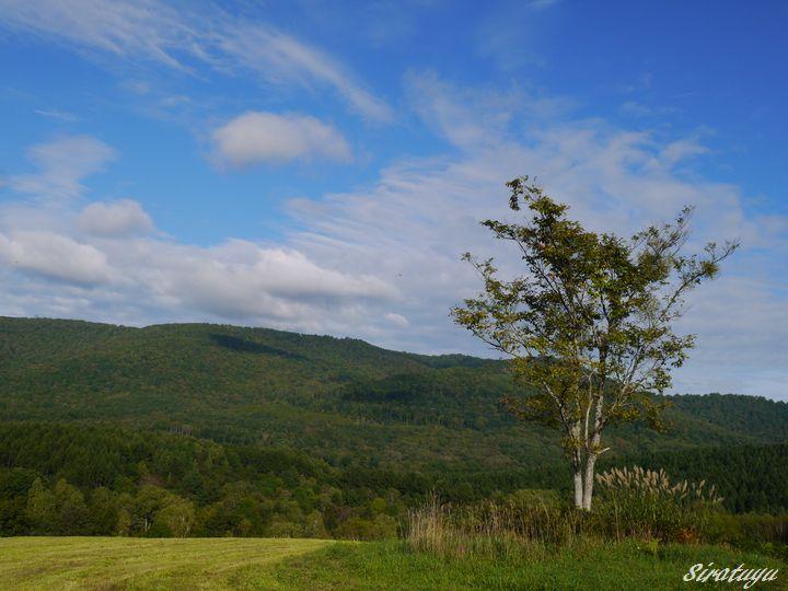 牧草畑の木2