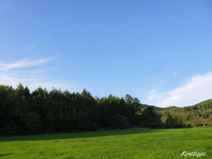 きのこ山の牧草畑