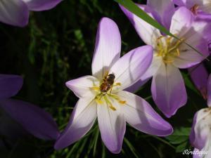 秋の花。名前は?3