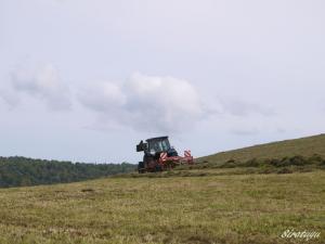 カイパの畑3
