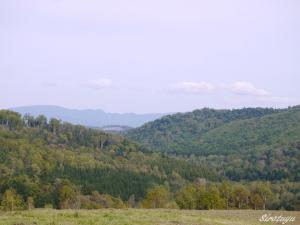 カイパの畑10